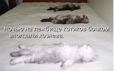юмор картинка рисунок фото чёрный коты