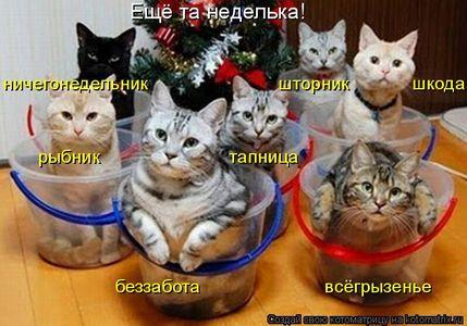Кошачья неделя